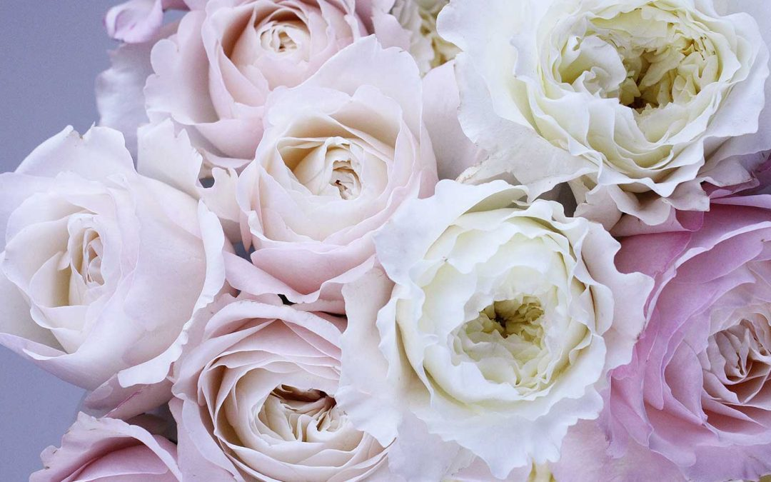 Sydney Florist Reveals Meaning Behind Popular Flower Types