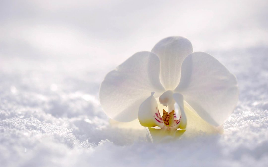 Flowers That Bloom In Winter